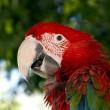 macaw-538461_1920