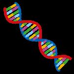 自閉症の原因とされる遺伝子の種類